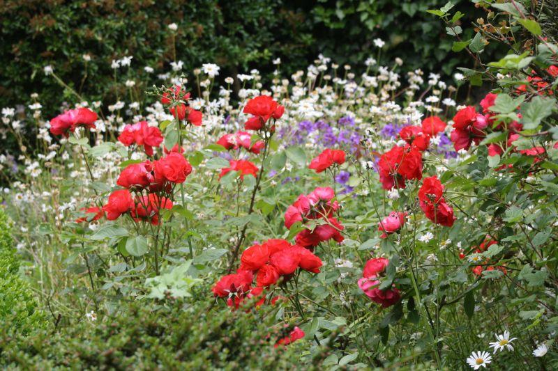 scènes de vie » fleurs sauvages et jardins de picardie